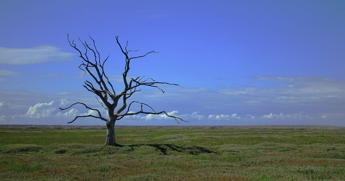 Death Dead Loneliness Tree Lonely Alone